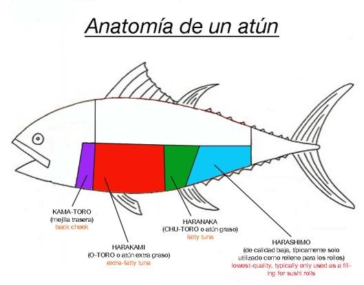 anatomía de atún -2